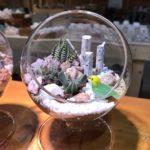 体験教室 : サボテン寄せ植えテラリウム