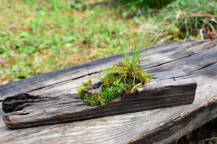 野の草盆栽