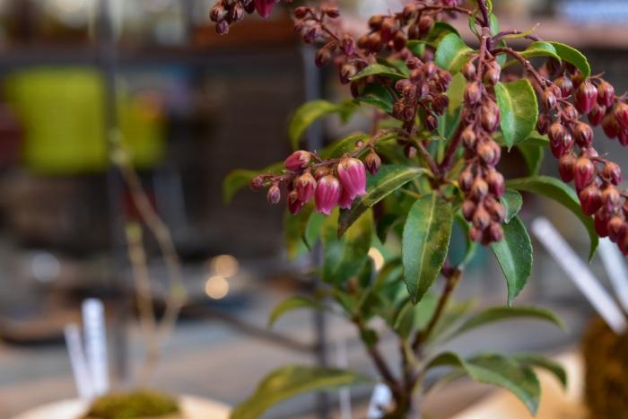 ミニ盆栽、苔玉