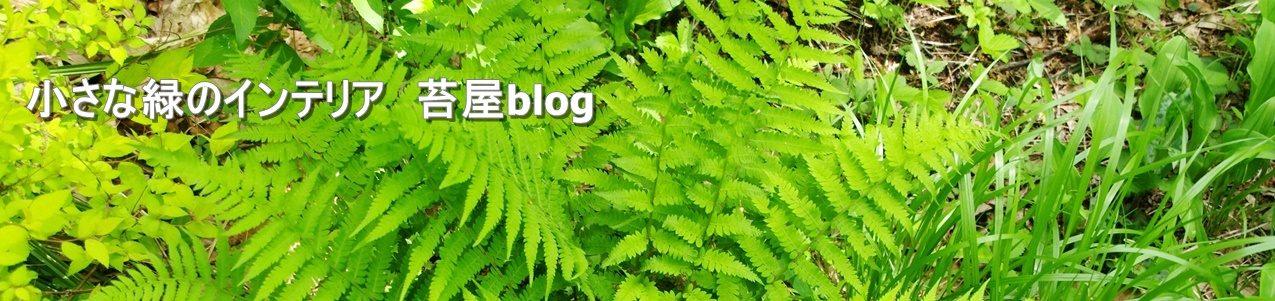 那須 苔屋のブログ
